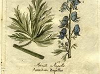 Farmacopea - Dall'archivio del Monastero